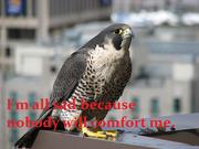 Sad birdie