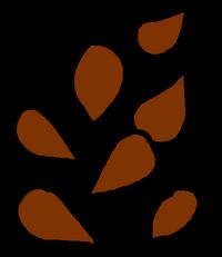 Seeds Brown