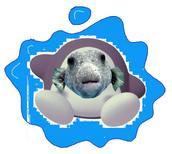 Waterdee