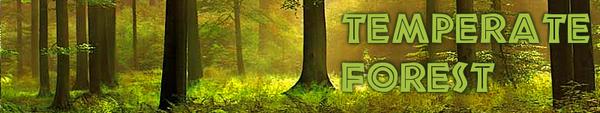 Temperateforest biome