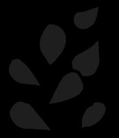 Seeds Black