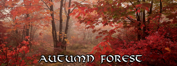 CeR Autumn Forest