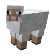 MP Sheep