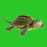 Reptilehouse icon