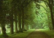 Floresta-2