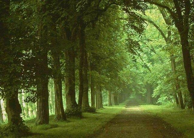File:Floresta-2.jpg