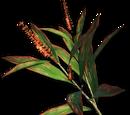 Far Cry 3 Plants
