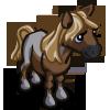 Shetland Pony Foal-icon