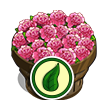 Organic Ballet Queen Flower Bushel-icon