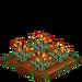 Golden Poppy 66