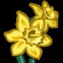 Daffodil-icon