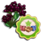 Elderbizzies-icon