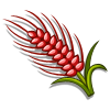 Red Australian Wheat-icon