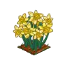 Perfect Daffodils-icon
