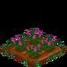 Lilac 66