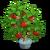 Bonsai Bobbing Apple Tree-icon
