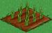 Asparagus 33