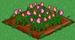 Pink Rose 66