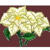 White Poinsettia-icon