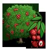 Lychee Tree-icon