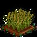 Barley extra100