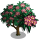 Pink Plumeria-icon
