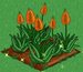 Aloe Vera extra100