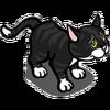 Found Black Cat