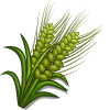 Green Australian Barley-icon