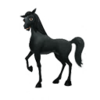 Black Arabian Horse