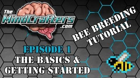 Bee Breeding Tutorial - Episode 1 The Basics & Getting Started-2