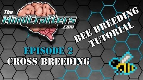 Bee Breeding Tutorial - Episode 2 Cross-Breeding