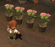 Gardeningpic