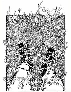 File:Crab grass.jpg