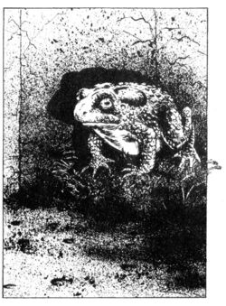Giant Toad1