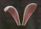 LRFFXIII Cute Bunny Ears