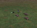 FFVIII Zell Pre-Battle Pose