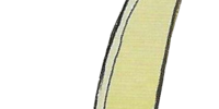 Sol Katti