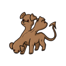 Cerberus pet
