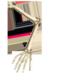 File:Human arm bones.png