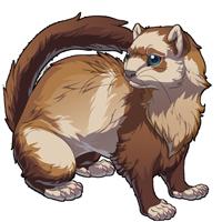 Chocolate Ferret