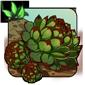 Corona Sempervivum