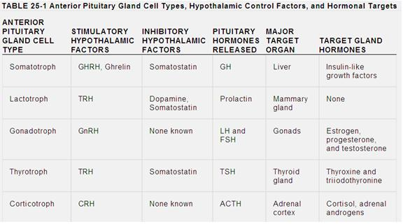 Hypothalamus and the Pituitary Gland | medschoolminutes