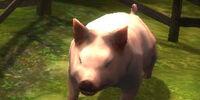 Lewy Jons' hog