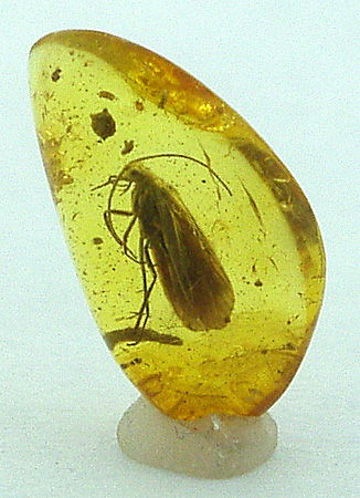 File:Amber-insect.jpg