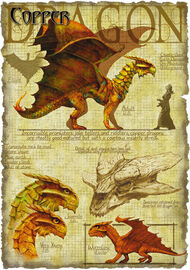 Copper dragon anatomy - Richard Sardinha