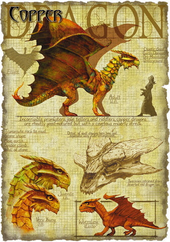 File:Copper dragon anatomy - Richard Sardinha.jpg