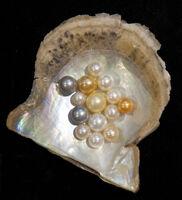 Pearl-variety