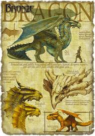 Bronze dragon anatomy - Richard Sardinha