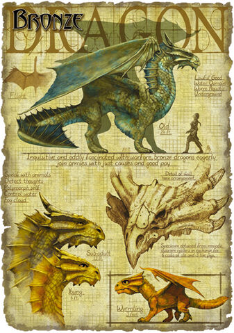 File:Bronze dragon anatomy - Richard Sardinha.jpg